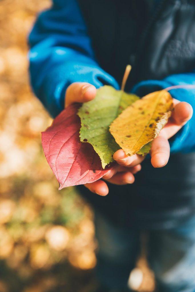 Niño con necesidades educativas especiales con tres hojas de árbol recogidas del suelo en sus manos.